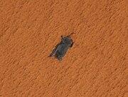 STS-119 bat