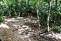 Samaná Province, Dominican Republic - panoramio (102).jpg