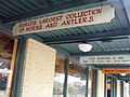 San Antonio TX - La mayor colección de cuernos.jpg