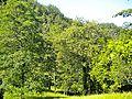 Sanguineta-Paesaggio 11.jpg