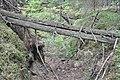 Sarkanās armijas ierakumi pie Gobdziņu kapsētas, Skrundas pagasts, Skrundas novads, Latvia - panoramio (3).jpg