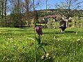 Schachblume am Seehotel Gut Dürnhof.jpg