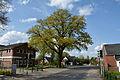 Schleswig-Holstein, Heist, Naturdenkmal 32-01 NIK 3071.JPG