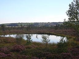 Schwarzes Moor Moorauge