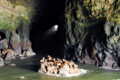 Sea-Lion-Caves.png