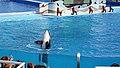 SeaWorld, San Diego - panoramio (3).jpg