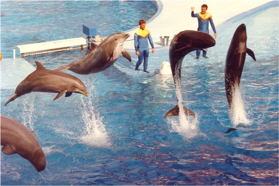 Sea World1