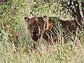 Serengeti 20 (14697493791).jpg
