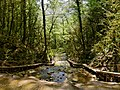 Shakhe River Thirty Three Waterfalls (263276753).jpeg