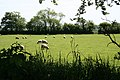 Sheep Pasture - geograph.org.uk - 182908.jpg