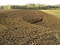 Shipshape Field - geograph.org.uk - 605070.jpg