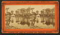 Silver Springs on the Oklawaha River, from Robert N. Dennis collection of stereoscopic views 5.png