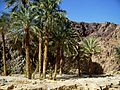 Sinai along the road to Nuweiba - panoramio.jpg
