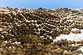 Sinfonía de las Piedras, valle de Garni, Armenia, 2016-10-02, DD 36.jpg