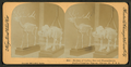 Skeleton of Caribou deer and hippopotamus. Field's Columbian Museum, Chicago, Ill., U.S.A, from Robert N. Dennis collection of stereoscopic views.png