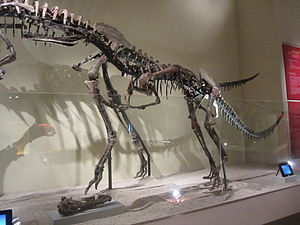 Xiongguanlong - Mounted skeleton cast