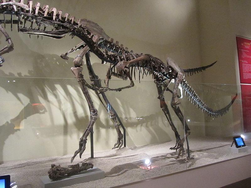 Skeleton of Xiongguanlong baimoensis.JPG
