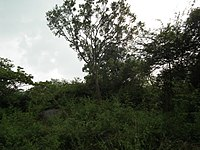 Snap from Bannerghatta National Park Bangalore 8524.JPG