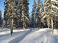 Snowblowed road.jpg