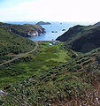 Solfach - Clifftop Walk.jpg