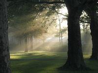 I raggi del sole attraverso la nebbia