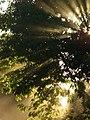 Sonne scheint durch Baum 2011.JPG