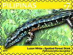 Sphenomorphus leucospilos 2011 stamp of the Philippines.jpg