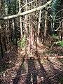 Spot the Bear, Brassetts Wood - geograph.org.uk - 344486.jpg