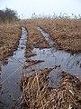 Stěžov, Mlýnský rybník, vyjetá kolej.jpg