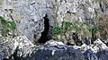 Stables Cave access below Culzean Castle, South Ayrshire - external view.jpg