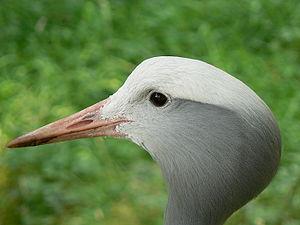 Edinburgh Zoo - A Stanley crane.