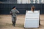 Stella, Bizallion, Guarding the Wolf Pack 140313-F-BS505-255.jpg