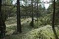 Stenkumla gravfält 4-1 - KMB - 16001000006852.jpg