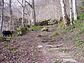Stepped path in Weem Wood - geograph.org.uk - 445288.jpg