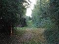 Stewards Green Lane, Coopersale Street (geograph 4253923).jpg