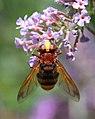 Strange Fly (2732951239).jpg