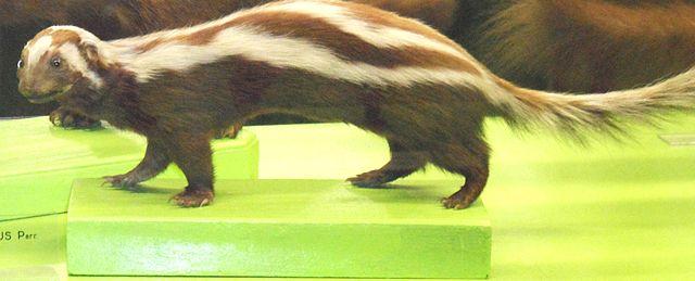 Level 1 Animals Mammals Birds Fi Memrise