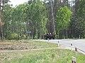 Strumiany, Poland - panoramio.jpg