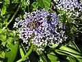 Strybing Arboretum - Flower3.JPG
