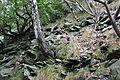 Suťový les na jižním svahu Milešovky (001).JPG