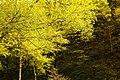 Summer Tree (157156855).jpeg