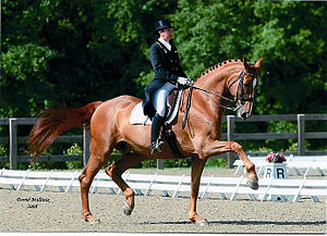 Equitation - Dressage horse and rider