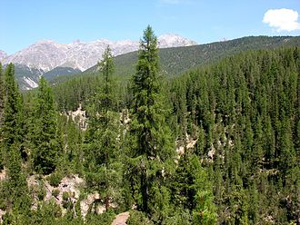Ecoregion - A conifer forest in the Swiss Alps (National Park).