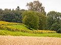 Tägerwilen; Landwirtschaft und Natur an der Gruebhalde.jpg