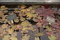 TU Delft Botanical Gardens 63.jpg