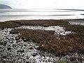 Taf estuary - geograph.org.uk - 440484.jpg