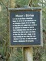 Tafel Hinterzartener Moor 1130124 Moor-Birke.jpg
