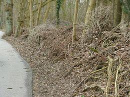 Dead hedge
