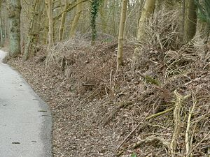 Dead hedge - Dead hedge