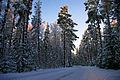 Talvine Uljaste tee.jpg